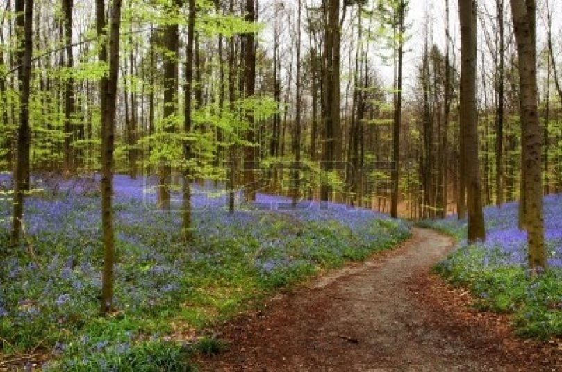 Springtime path in the woods