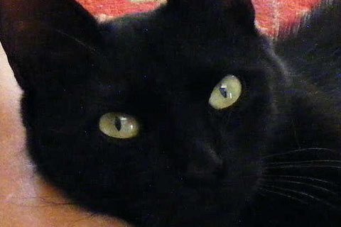 Black Cat, Green Eyes