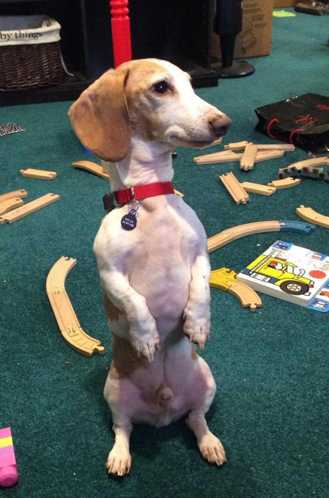 Oscar dog