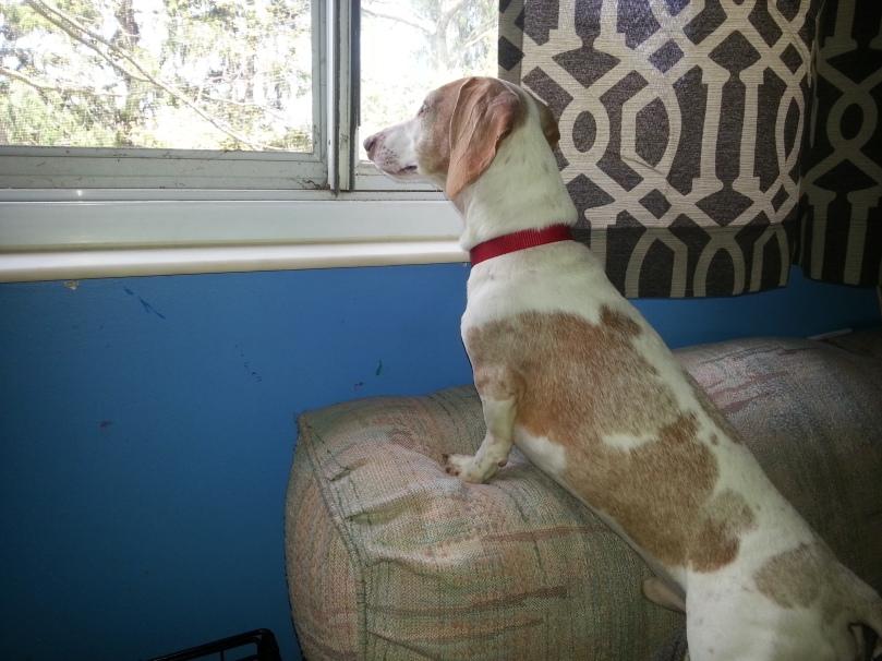 Oscar at window.